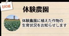 ブログ「体験農園」を見るにはここをクリック 体験農園に植えた作物の生育情報をお知らせします